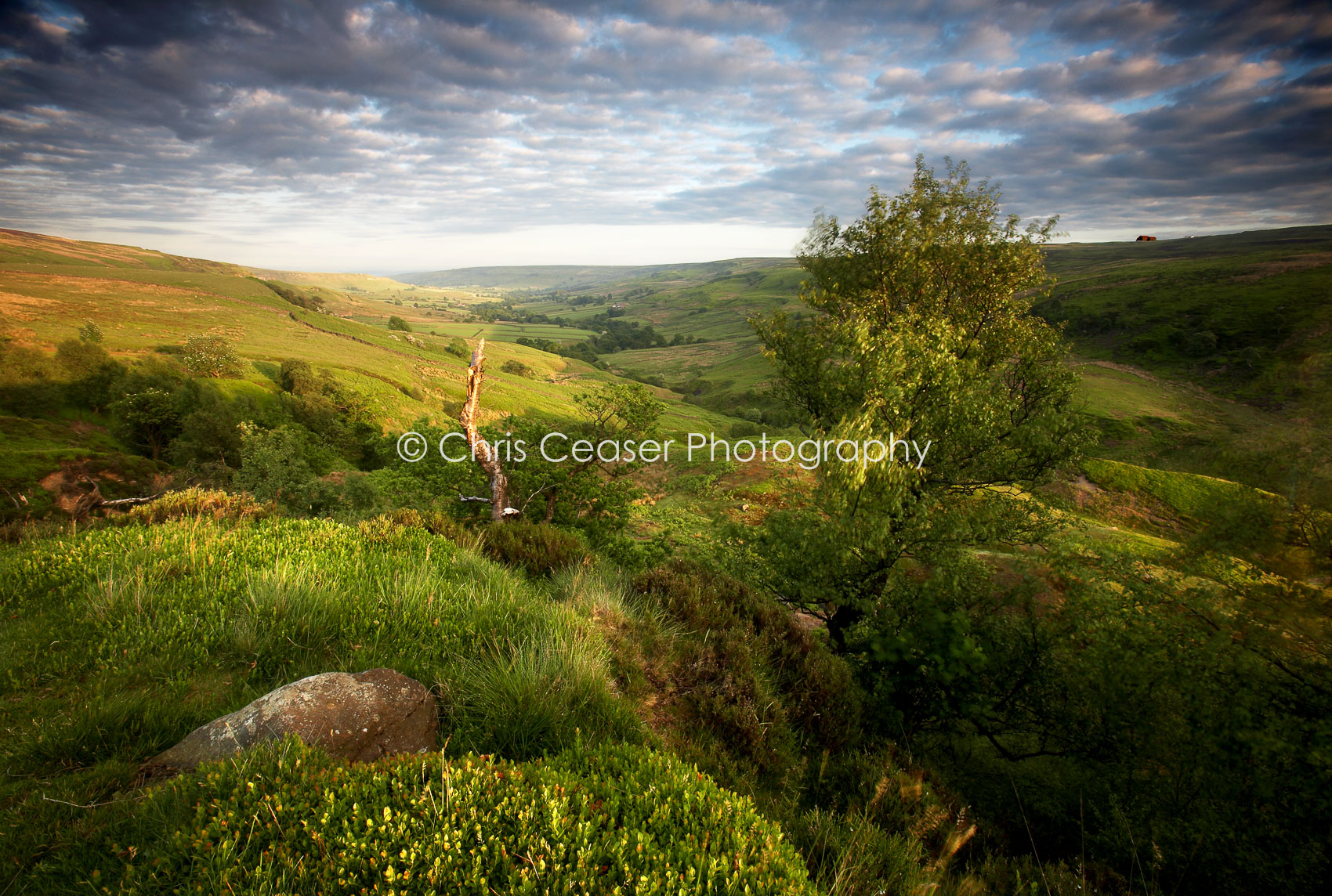 Above The Railway, Rosedale