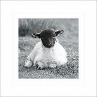 Card SQ7 - Blackface lamb