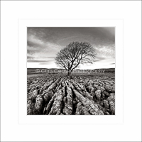 Card SQ18 - Lone Tree