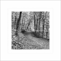 Card SQ1 - Autumn Pathways