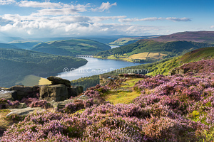 Purple Haze, Bamford Edge
