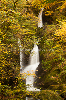 Through The Leaves, Stock Ghyll Falls
