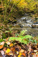 Fallen Leaves, Stock Ghyll