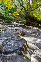 Autumn Waters, West beck