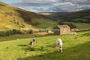 Pasturelands, Swaledale