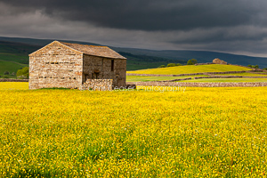 2, Summer. Black & Gold, Yorkshire Dales. 16x10.66 inch print, signed.