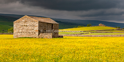 Storms & Buttercups, Wensleydale