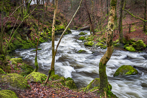 Spring Moss, Stock Ghyll