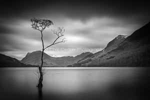 Windswept, Buttermere