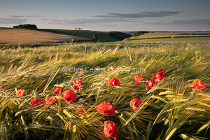 2, Summer. Fields Of Dreams, Yorkshire Wolds. 16x10.66 inch print, signed.