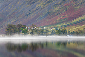 Trees In Mist, Buttermere