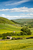 Fields Of Gold, Swaledale