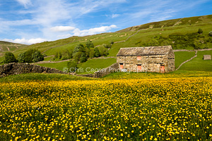 Barns and buttercups