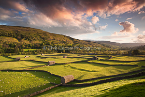 Golden Valleys, Swaledale