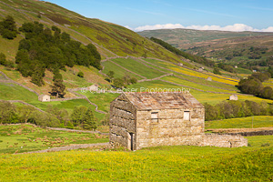 Summer Meadows, Swaledale