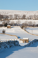 After The Snows, wensleydale