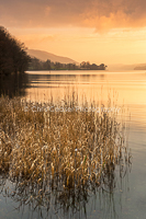 In The Reeds, Coniston Water