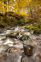 Autumn Flow, Stock Ghyll