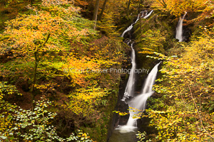 Autumn Gold, Stock Ghyl Falls