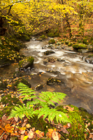 Autumn By The Beck, Lake District