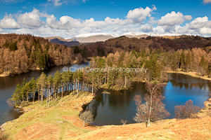 1, Spring. 'Spring At tarn Hows, Coniston'. 16 x 10.66 inch print, signed