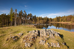 Spring Colours, Tarn Hows