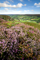 Danby Dale Heather