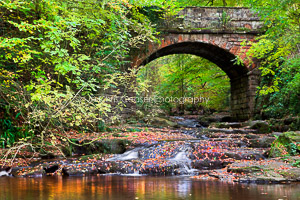 Autumn By The Bridge, May Beck
