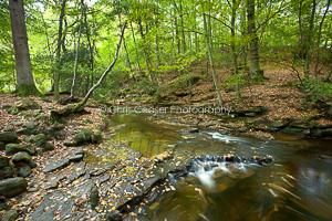 Autumn in May Beck, North York Moors