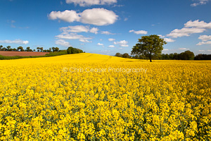 Late Spring Colour, N Yorks